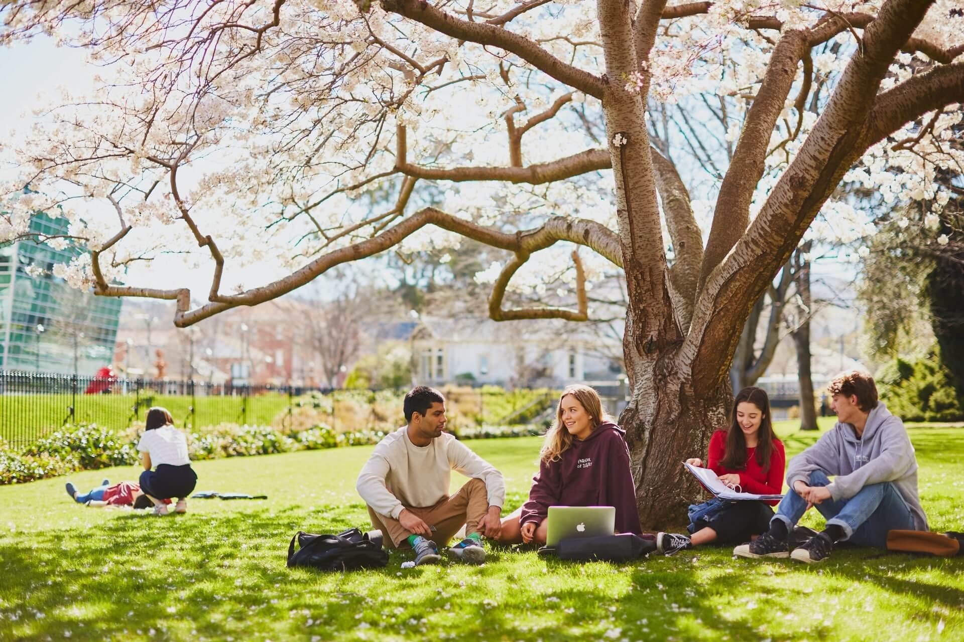 学生在校园注册表草坪上