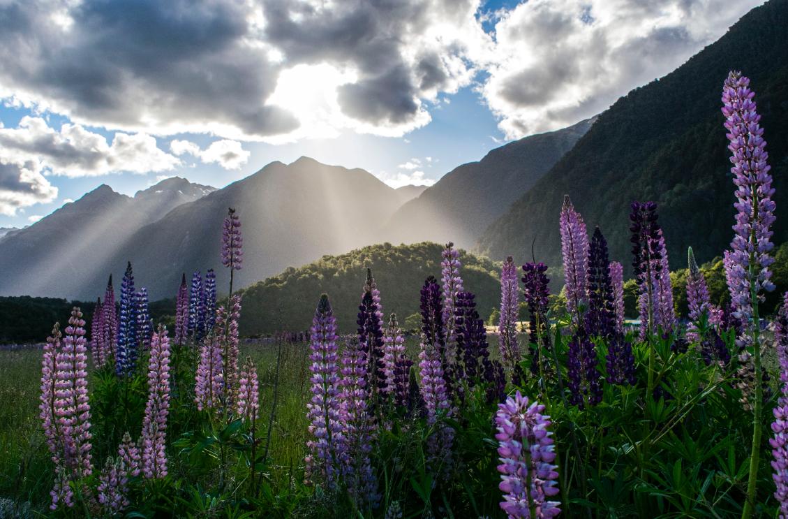 云逛新西兰 | 这些新西兰名校居然和美景这这这么近?